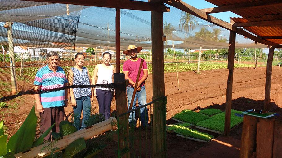 Programa de Aquisição de Alimentos da Agricultura Familiar incentiva a produção de olerículas no município de Guzolândia.